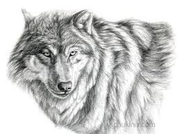 gray wolf face drawing. Wonderful Drawing Grey Wolf  Portrait By Sschukina  Inside Gray Face Drawing