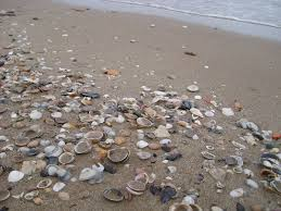 Seashell - Wikipedia