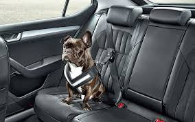 skoda unveils a seatbelt to keep your dog safe on the road inhabitat green design innovation architecture green building