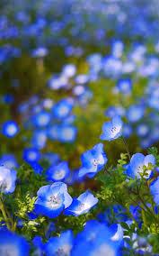 flower wallpaper best cool flower wallpapers screenshot 1