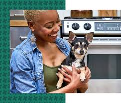 Heart + <b>Paw</b> | Veterinary - Pet Groomer - Dog Daycare