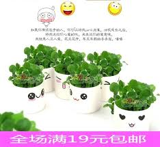 small office plant. Small Office Plant Wholesale Mini Desktop Expression Grass Head Doll Potted Gift . R