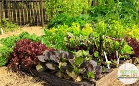 7 free garden planners for beginner