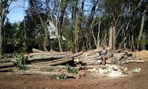 daniels tree service95
