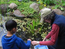 first place uc master gardeners in action learning about critters in a pond