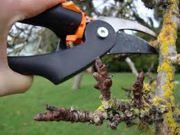Tips And Tricks For Planting Fruit Trees This Spring  Baltimore SunDormant Fruit Trees