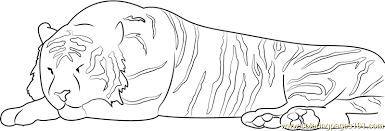 Small Picture Sleeping Tiger Coloring Page Free Tiger Coloring Pages