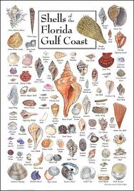 Oyster Identification Chart Image Result For Shell Identification Chart Pacific Coast