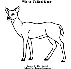 Small Picture Deer Pictures To Color Printable Deer Coloring Pagesjpg Pages