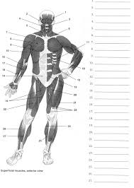 label muscles worksheet body muscles muscles  label muscles worksheet