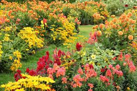 13 Easy Garden Plants To Grow - Cheap Hardy Plant Ideas
