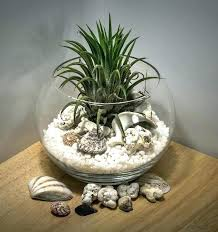 air plant containers holders to display your collection plants and octopus wall mount mounted air plant wall holder