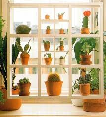In the bedroom Displaying Plants on Shelves 2
