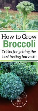 Kitchen Garden Blog 17 Best Ideas About Vegetable Gardening On Pinterest Gardening