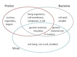 Venn Diagram Plants Plants And Animals Venn Diagram Of Protists Oasissolutions Co