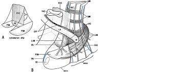 raven sensor wiring diagram raven automotive wiring diagrams raven sensor wiring diagram 8 1430590x%5ce5fdbddc 3aa6 485c b834 b4a7f2d69af9