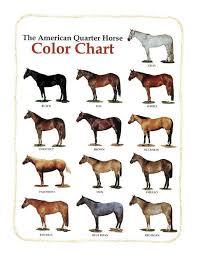 Quarter Horse Breed Vegas Gaming Tips