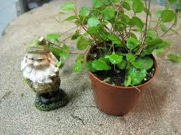 Wondering how to plant a terrarium?