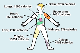 Human Nutritional Needs Chart How Many Calories Is That Human A Nutritional Guide For