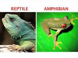 Difference Between Amphibians And Reptiles Venn Diagram Whats The Difference Between An Amphibian And A Reptile Find Out In This World Book Explains Video
