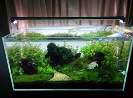 the planted tank forum view single post high tech turtle tank