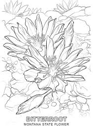 Small Picture Montana State Flower coloring page Free Printable Coloring Pages