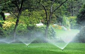Image result for your grass is going to be watered twice a day