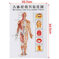 Meridian Energy Pen Chart 7pcs Set Acupuncture Massage Point Map Chinese English