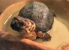 Animal Feeding Box Turtles Nova Parks