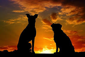 Image result for Silhouette two dogs in love