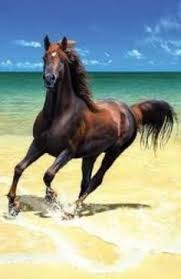 beautiful horses running in water. Modren Water Horse At The Beach Beautiful Creatures Animals Beautiful Horses  All The Pretty And Horses Running In Water R