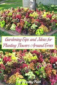 planting garden gardening tips and ideas for planting flowers around trees paing patch planting gardens in