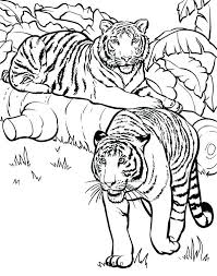Coloring Pages Of Tigers Arcadexme