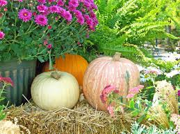 Image result for fall garden