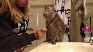angel bullock diva makeup monkey is at it again