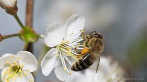 garden pesticides. Bee-friendly Plants Sold At Garden Centers Found To Be Heavily Contaminated With Deadly Pesticides I