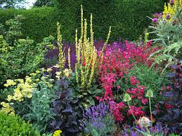 a colourful herbaceous border