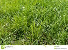 tall green grass field. Download Comp Tall Green Grass Field