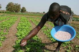 Why we temporary stopped fertilizer production' - Latest Nigeria News,  Nigerian Newspapers, Politics