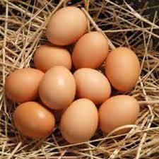 Image result for gambar telur