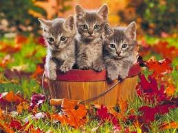 Image result for photos of autumn cats