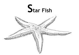 Small Picture Coloring Pictures Of StarfishPicturesPrintable Coloring Pages
