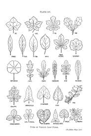 drawing line shape drawing reference nature journal botanical leaf shapes