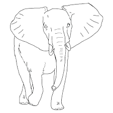 Elephant Color Pages Cartoon Elephant Coloring Pages Of Elephants