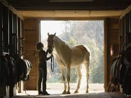 tips to provide good barn lighting the 1 resource for horse farms les and riding instructors le management