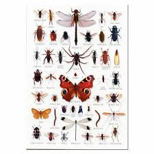 Details About Bugs Insects A5 Identification Card Chart Postcard New
