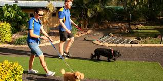 Is It Safe To Leave My Pet With A Pet Sitter Pet Minder Or Backyard