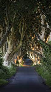 Oak trees, road, tunnel 750x1334 iPhone ...