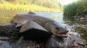Top 10 Největších Ryb Na Světě Fotografie Jména Stanoviště