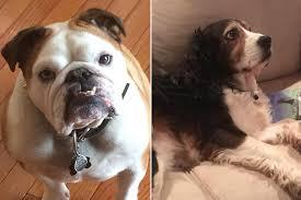 petsmart animals dogs. Wonderful Animals To Petsmart Animals Dogs C